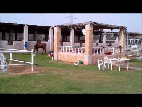 ArabianSandStables-1stmovie.wmv