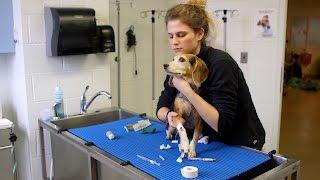 Meet Rebecca Bernstein | Life At Vet U - ANIMALPLANETTV