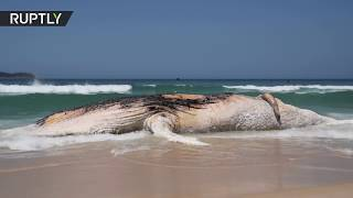 30-tonne whale found dead on Rio's Ipanema Beach - RUSSIATODAY