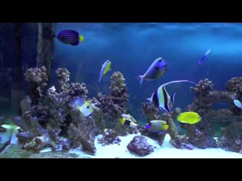 Marine Fish Community Tank