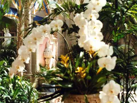 ORCHIDS  GALORE.wmv