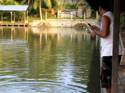 Mancing ikan bawal tawar