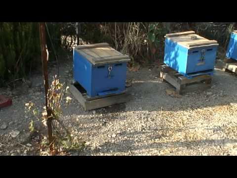 ΜΕΛΙΣΣΕΣ δηλητηρίαση των μελισσών από φυτοφάρμακα