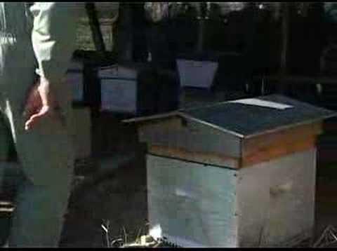 Les abeilles en fête à Clères