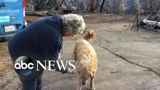 Homeowner finds dog upon return to property after catastrophic wildfire - ABCNEWS