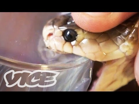 The Guy Who Injects Snake Venom 2013 documentary movie play to watch stream online