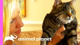 Do Cats Really Have 9 Lives?! | Cats 101 - ANIMALPLANETTV