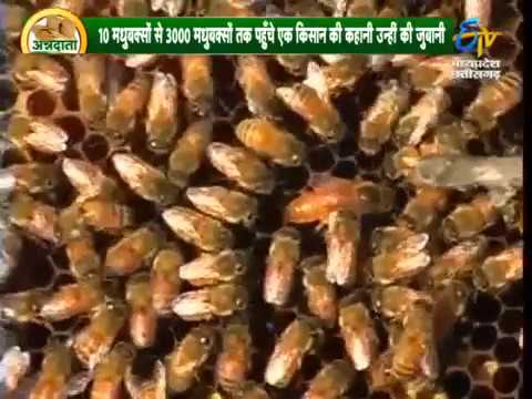 Tyagibeefarm Beekeeping  tips in hindi