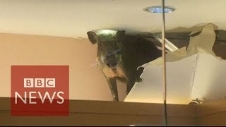 بالفيديو.. حيوان مفترس يخترق سقف مول