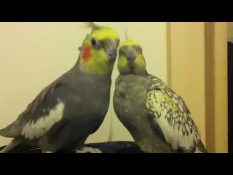 Pets & Animals: Tina and Alex making out