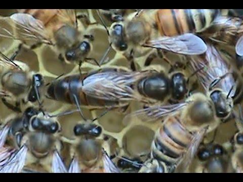 Beekeeping: Garden of Eden Bee Rescue.