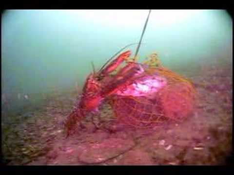 Lobster bait bag