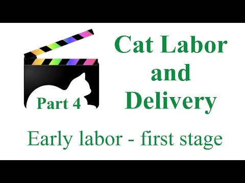 Feline Labor and Delivery - part four - Cheena has kittens