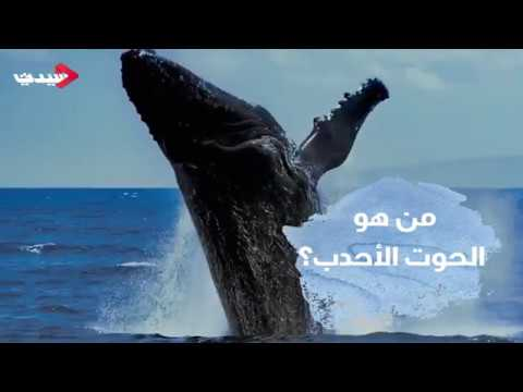 من هو الحوت الأحدب؟ - عرب توداي
