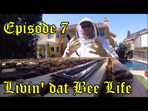 Flow Hive - Episode 7 -  Livin' Dat Bee Life