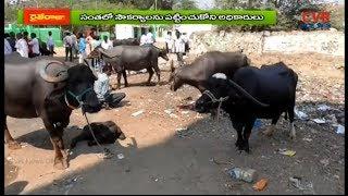 పశువుల సంతలో సౌకర్యాలు కరువు | ప్రస్తుతం వెలవెలబోతున్నపశువుల సంత | Narayankhed | CVR NEWS - CVRNEWSOFFICIAL