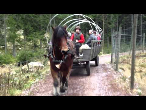Horse and Purno Tomteland Mora Sweden 3 Dec 2011 p3