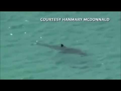 Ataque de tubarão vídeo 6 por tavarescma