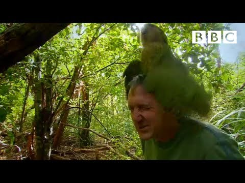 Shagged by a rare parrot &#8211; Last Chance To See &#8211; BBC Two What Is Local Search