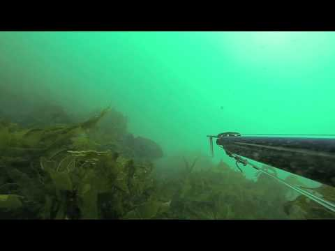 NSW Australia spearfishing highlights from 2012/2013...