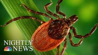 Lyme Disease-Carrying Ticks Spreading To New Areas, Scientists Warn | NBC Nightly News - NBCNEWS