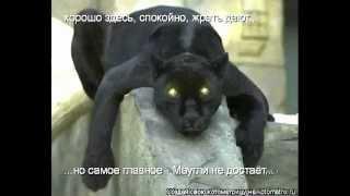 Жил да был чёрный кот песня скачать бесплатно
