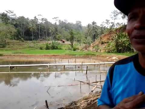 Waglo dan Budi Daya Ikan Air Tawar