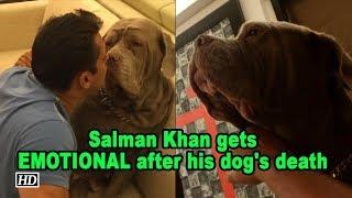 Salman Khan gets EMOTIONAL after his dog's death - IANSLIVE