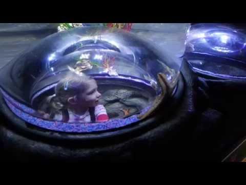 Sea Stars at SEA LIFE Centre Birmingham (Review Video)