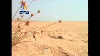 AP Government Planning To Lessen The Desert Area In Anantapur District - ETV2INDIA
