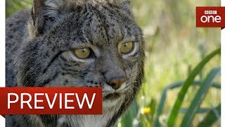 Releasing a lynx into the wild - Big Cats - BBC One - BBC