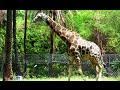 NEHRU ZOO HYDERABAD - HD Video - Complete Coverage