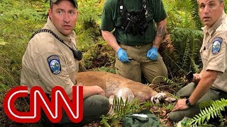Cougar kills cyclist, mauls another in rare attack - CNN