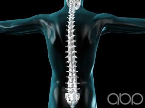 Spine Flexing - Vertebral Column - 3D Medical Animation    ABP ©