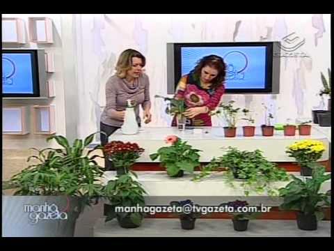 3a aula de jardinagem na TV Gazeta por Nô Figueiredo