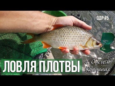 рыбалка. ловля плотвы летом