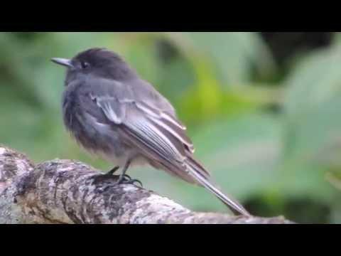 Aves de Venezuela - Aves de Barinas 6