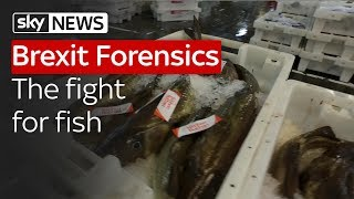 Brexit Forensics: The Fight for Fish - SKYNEWS