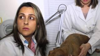 Pet no Ar - Pgm 05 - Oftalmologista