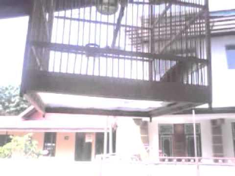 burung cendet semarang