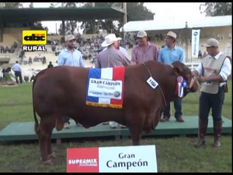 Juzgamiento del ganado de carne en  la Expo 2014