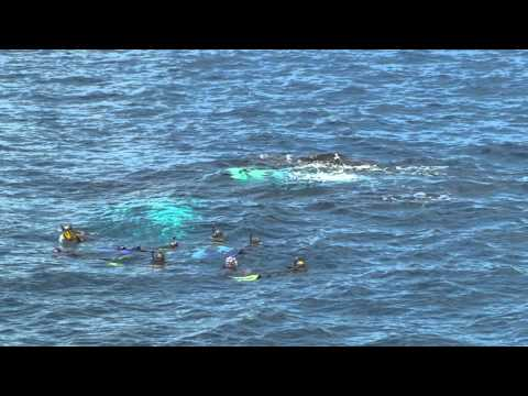 How We Swim With Whales.mov