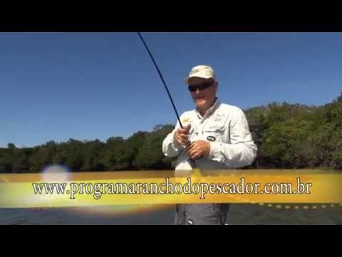 Peixe Pirarucu gigante, mais de 2 metros