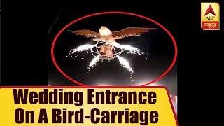 Couple's Creative Wedding Entrance on a bird-carriage - ABPNEWSTV