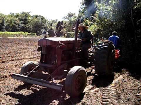 Meu Cunhado Sinésio plantando mandioca