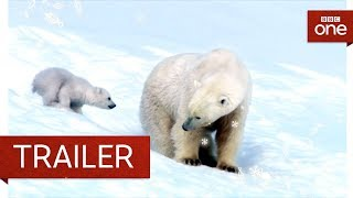 Snow Bears: Trailer - BBC One - BBC