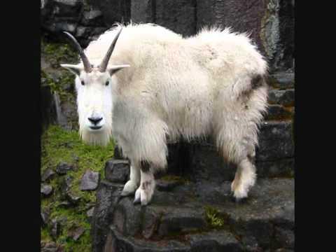 Last Man on Earth - The Mountain Goats