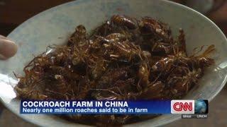 Cockroach farmer makes big bucks on bugs - CNN