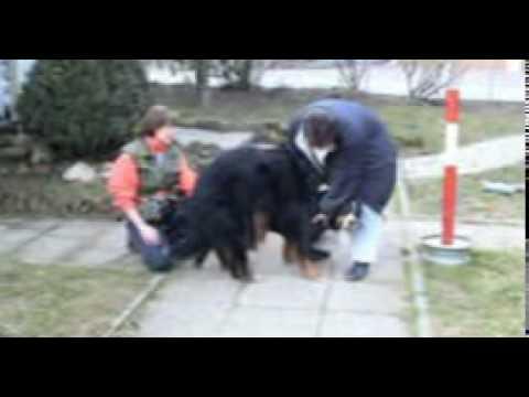 Supervised Dog Mating