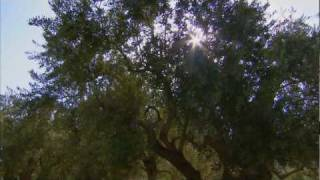 Israel In You – TV commercial #2